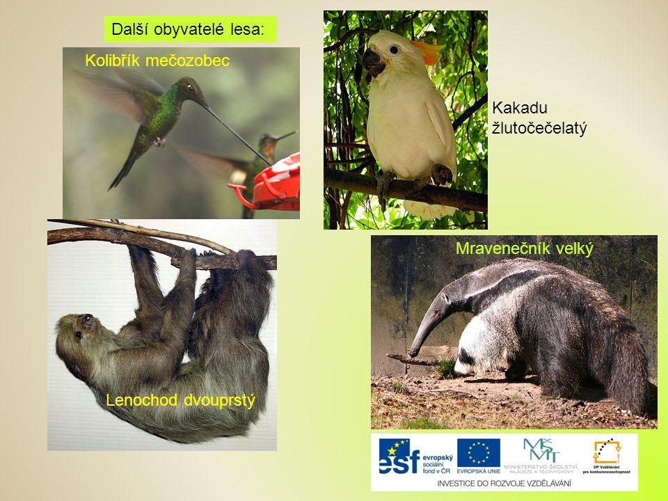 Kolibřík mečozobec Kakadu žlutočečelatý Lenochod dvouprstý Další obyvatelé lesa: Mravenečník velký