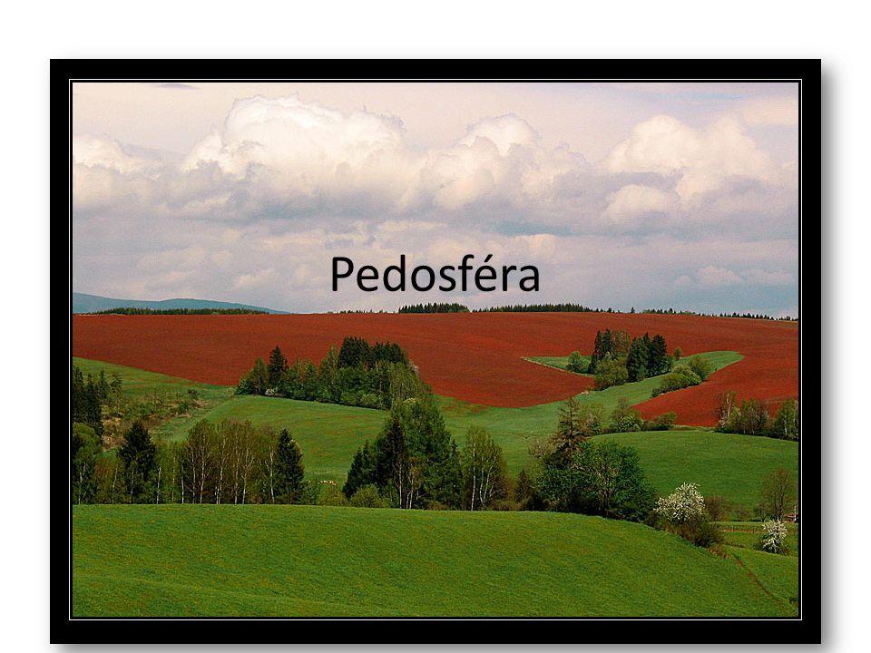 Pedosféra