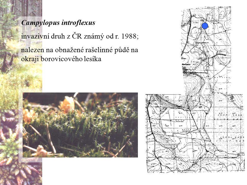Campylopus introflexus invazivní druh z ČR známý od r. 1988; nalezen na obnažené rašelinné půdě na okraji borovicového lesíka
