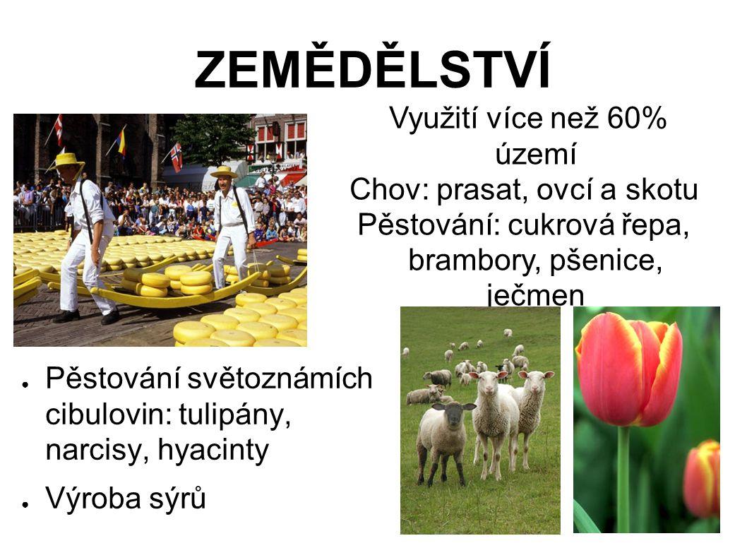 ZEMĚDĚLSTVÍ ● Pěstování světoznámích cibulovin: tulipány, narcisy, hyacinty ● Výroba sýrů Využití více než 60% území Chov: prasat, ovcí a skotu Pěstování: cukrová řepa, brambory, pšenice, ječmen