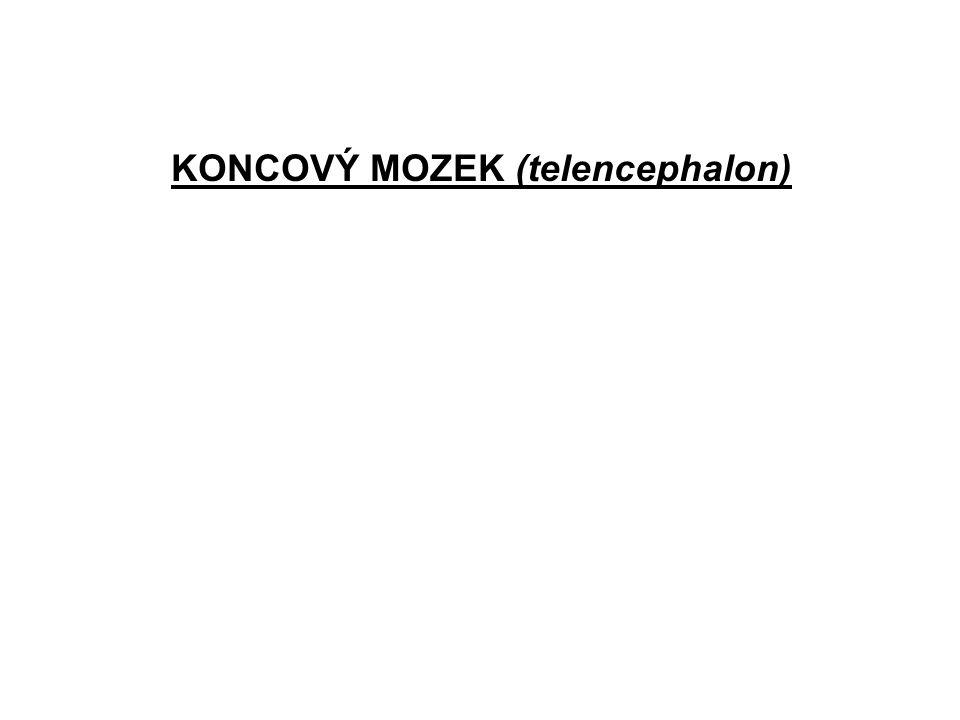 KONCOVÝ MOZEK (telencephalon)