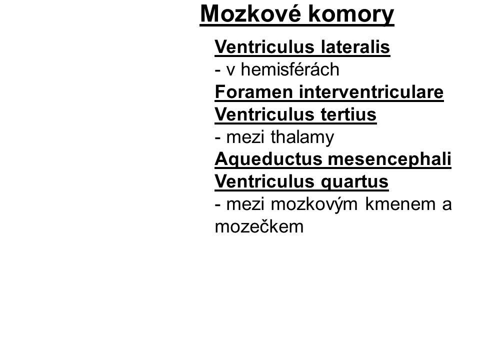 Mozkové komory Ventriculus lateralis - v hemisférách Foramen interventriculare Ventriculus tertius - mezi thalamy Aqueductus mesencephali Ventriculus