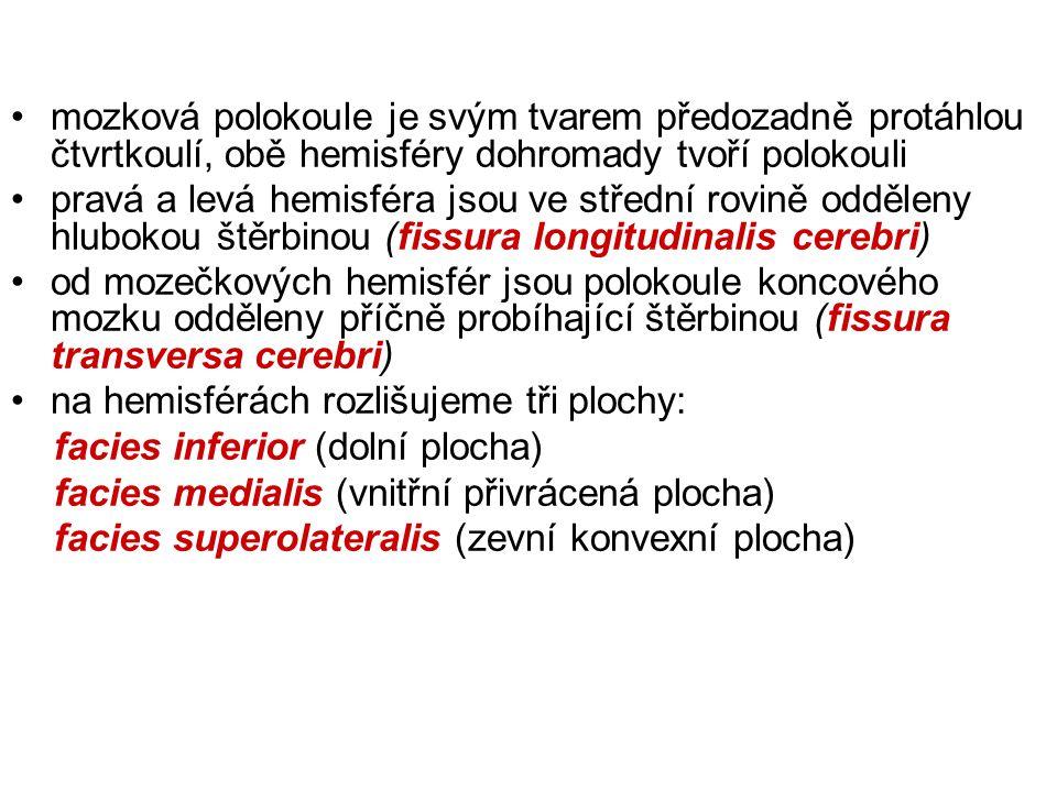 ependym komor+pia mater = tela choroidea- plexus choroideus- liquor cerebrospinalis (150ml, denně 500ml) apertura mediana et laterales ventriculi IV.