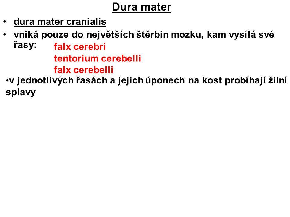 Dura mater dura mater cranialis vniká pouze do největších štěrbin mozku, kam vysílá své řasy: falx cerebri tentorium cerebelli falx cerebelli v jednot