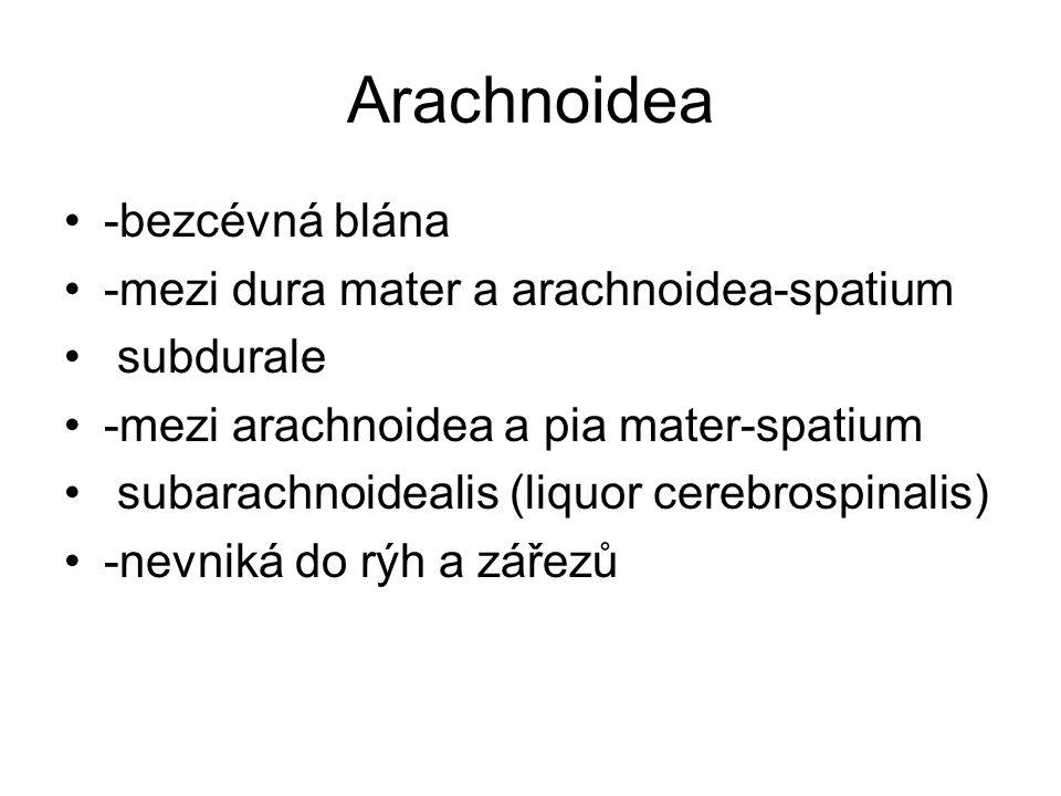 Arachnoidea -bezcévná blána -mezi dura mater a arachnoidea-spatium subdurale -mezi arachnoidea a pia mater-spatium subarachnoidealis (liquor cerebrosp