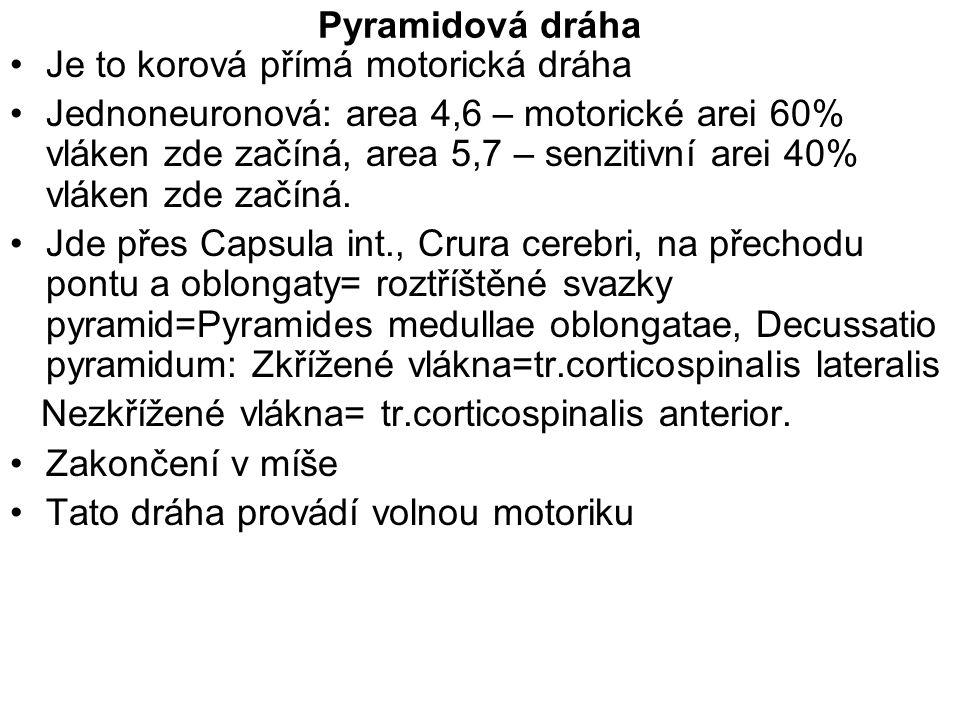 Pyramidová dráha Je to korová přímá motorická dráha Jednoneuronová: area 4,6 – motorické arei 60% vláken zde začíná, area 5,7 – senzitivní arei 40% vl
