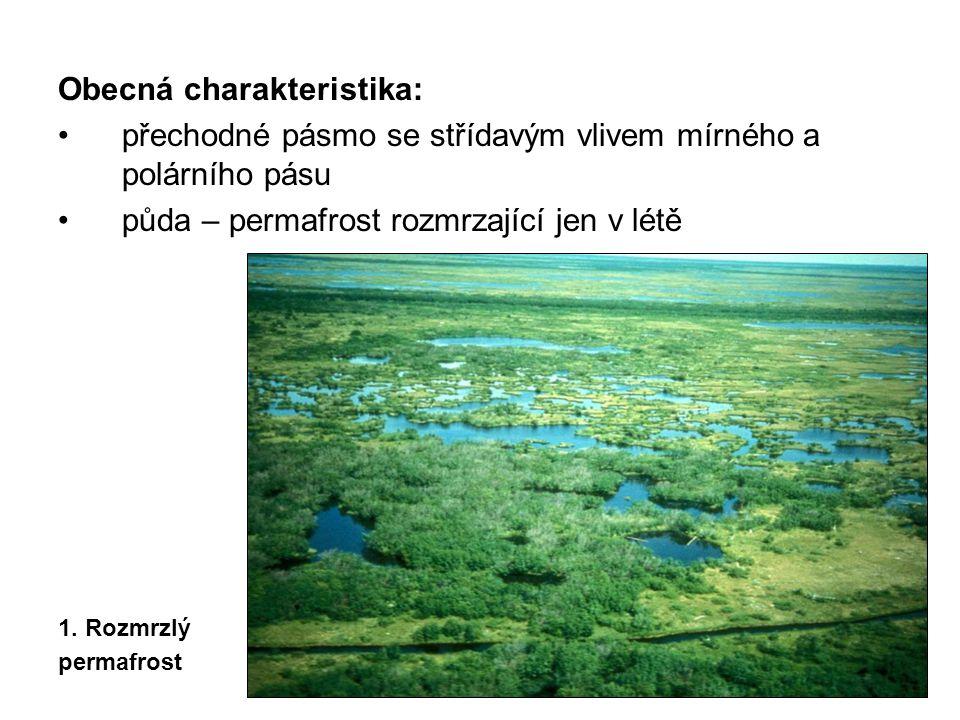Obecná charakteristika: přechodné pásmo se střídavým vlivem mírného a polárního pásu půda – permafrost rozmrzající jen v létě 1.