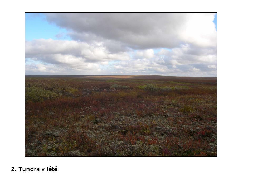 2. Tundra v létě