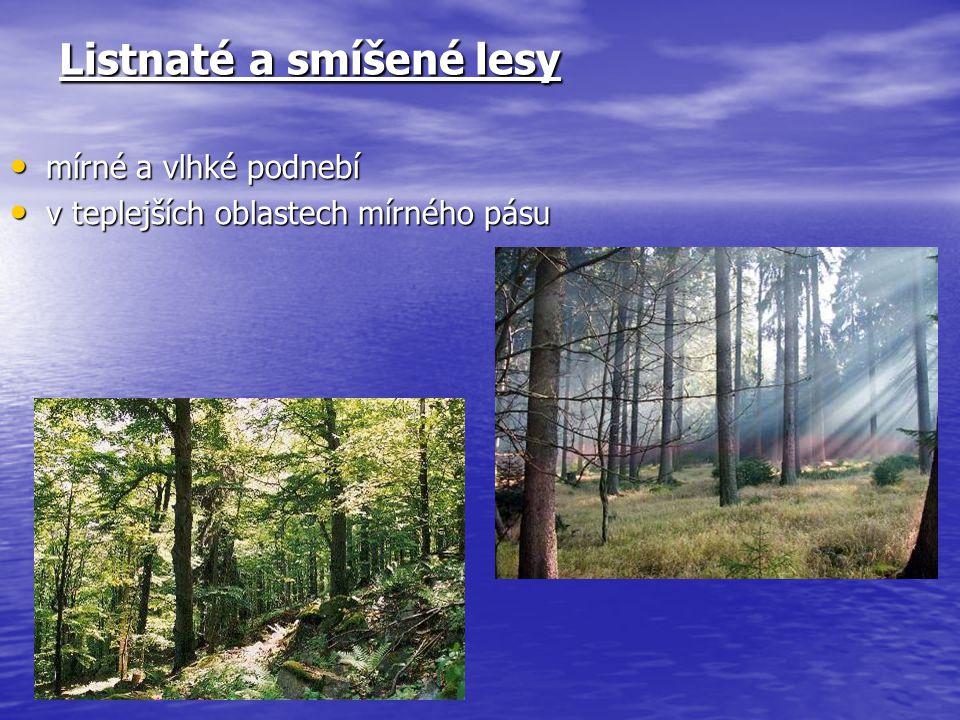 Listnaté a smíšené lesy mírné a vlhké podnebí mírné a vlhké podnebí v teplejších oblastech mírného pásu v teplejších oblastech mírného pásu