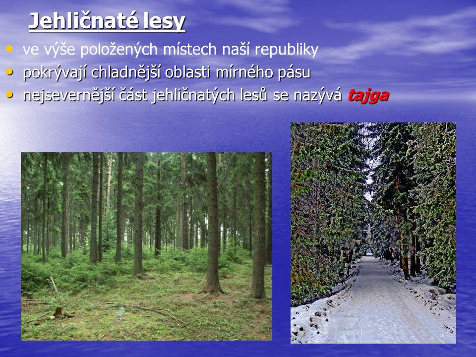 Jehličnaté lesy ve výše položených místech naší republiky pokrývají chladnější oblasti mírného pásu pokrývají chladnější oblasti mírného pásu nejsever
