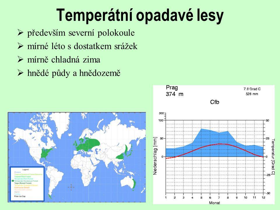 Temperátní opadavé lesy  především severní polokoule  mírné léto s dostatkem srážek  mírně chladná zima  hnědé půdy a hnědozemě