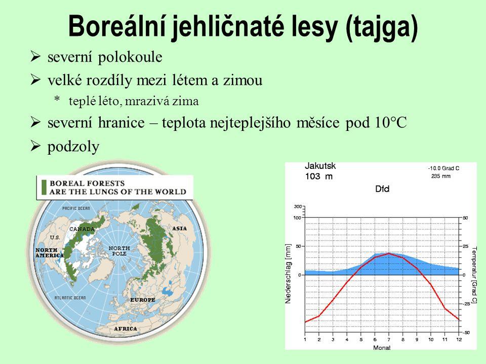 Boreální jehličnaté lesy (tajga)  severní polokoule  velké rozdíly mezi létem a zimou *teplé léto, mrazivá zima  severní hranice – teplota nejteple