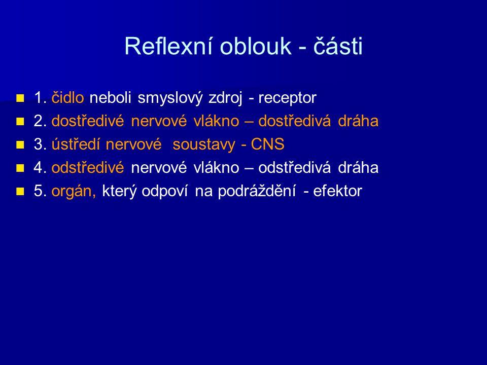 Reflexní oblouk - části 1. čidlo neboli smyslový zdroj - receptor 2. dostředivé nervové vlákno – dostředivá dráha 3. ústředí nervové soustavy - CNS 4.