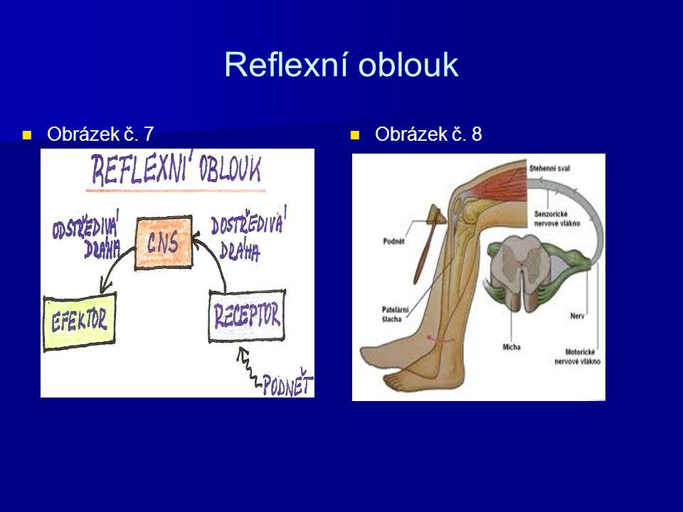 Reflexní oblouk Obrázek č. 7 Obrázek č. 8