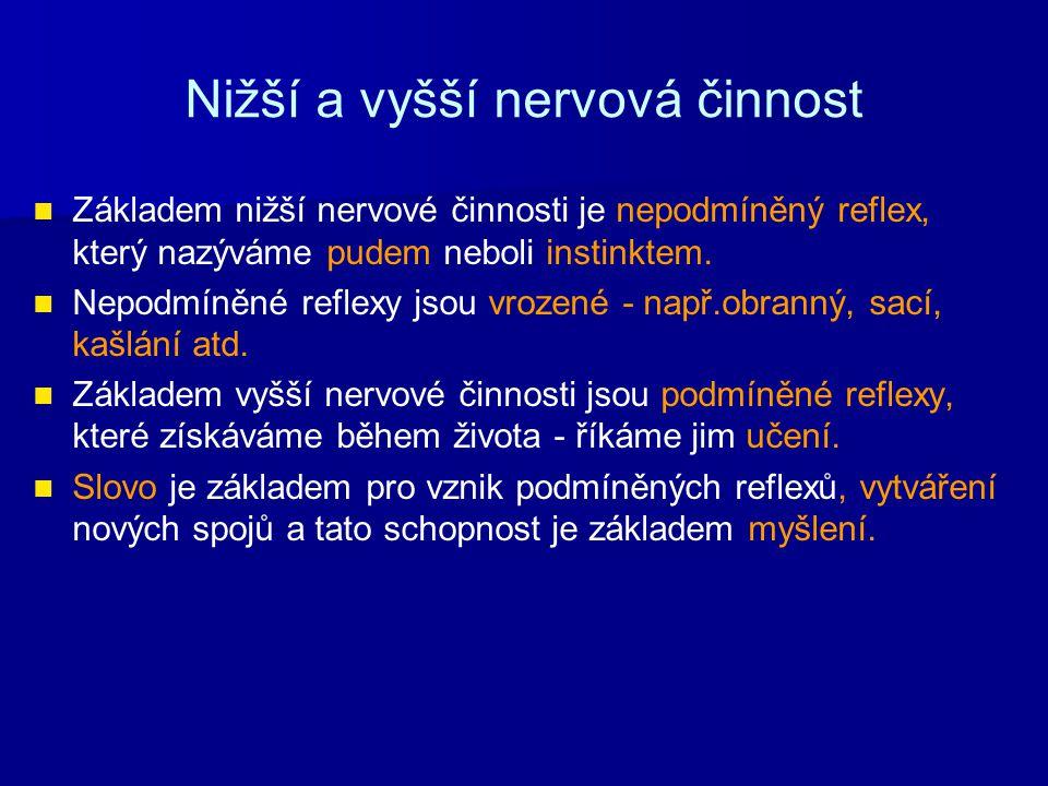 Nižší a vyšší nervová činnost Základem nižší nervové činnosti je nepodmíněný reflex, který nazýváme pudem neboli instinktem. Nepodmíněné reflexy jsou