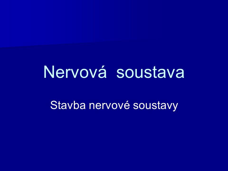 Nervová soustava Hlavním úkolem nervové soustavy je zajistit vzájemnou souhru mezi jednotlivými orgány a kontroluje činnost všech částí organizmu.