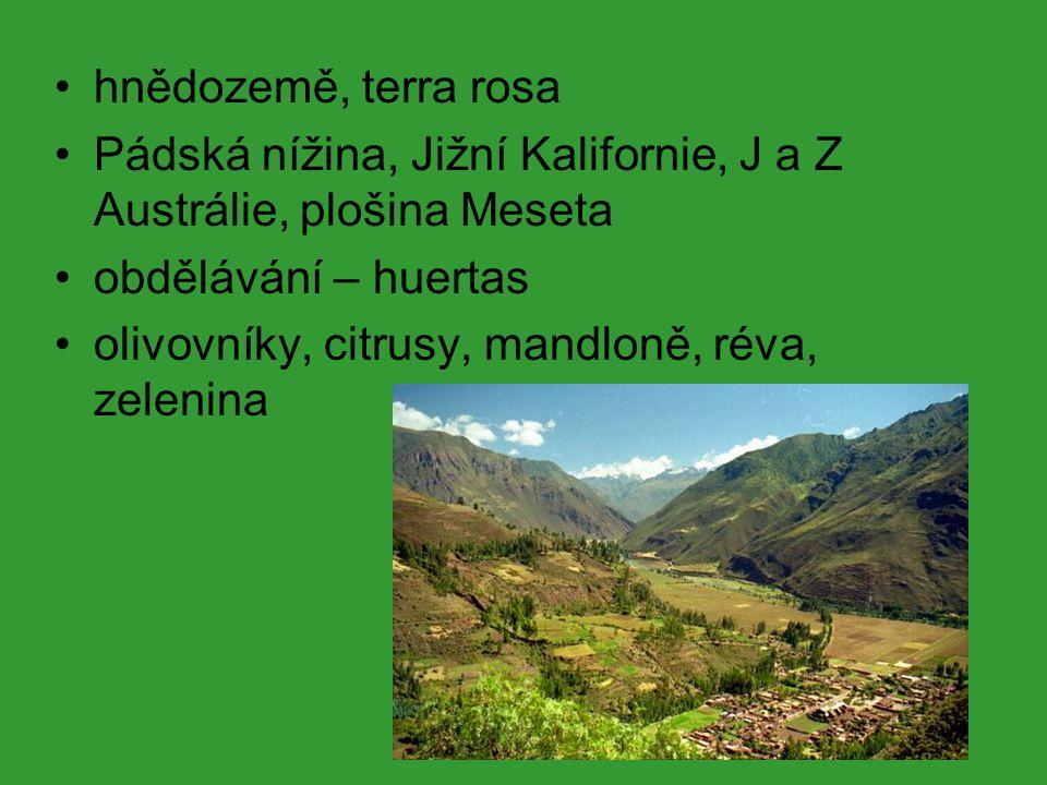 S obdobím letních dešťů východní okraje kontinentů trvale zavlažované, monzunové klima letní monzun (od jihu a jihovýchodu) zimní monzun – chladný, suchý monzunové řeky stále zelené lesy rododendrony, magnolie