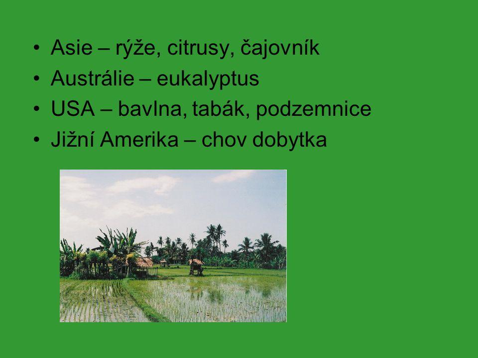 Asie – rýže, citrusy, čajovník Austrálie – eukalyptus USA – bavlna, tabák, podzemnice Jižní Amerika – chov dobytka