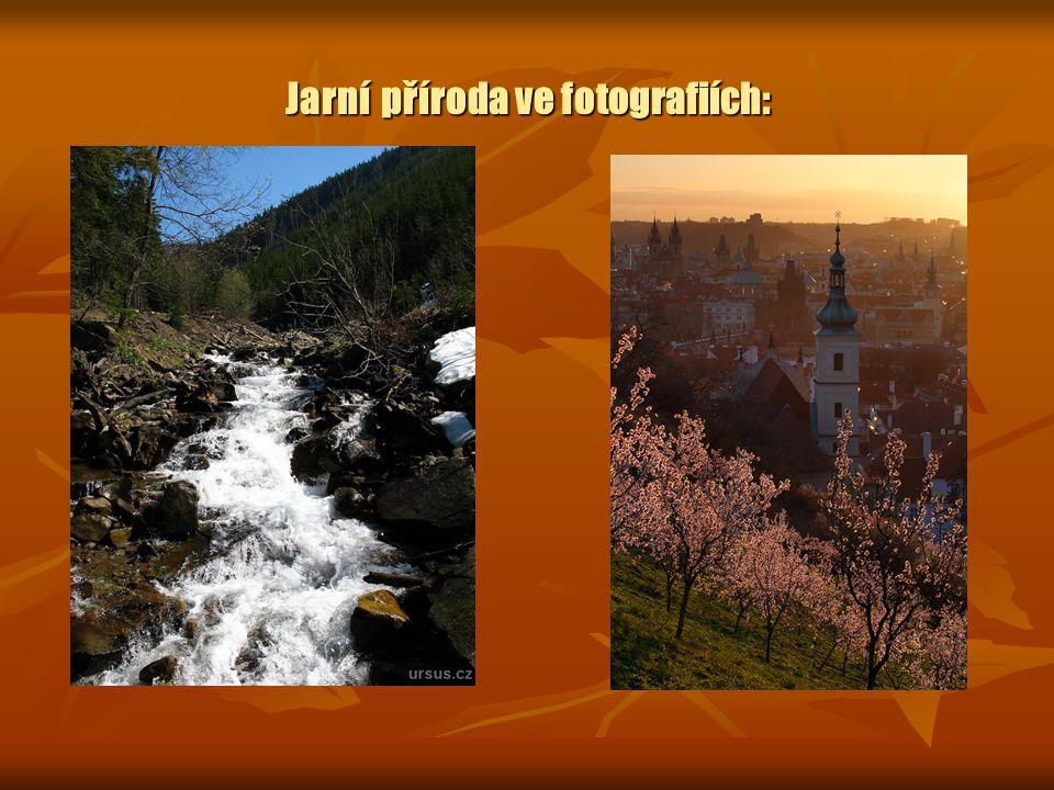 Jarní příroda ve fotografiích: