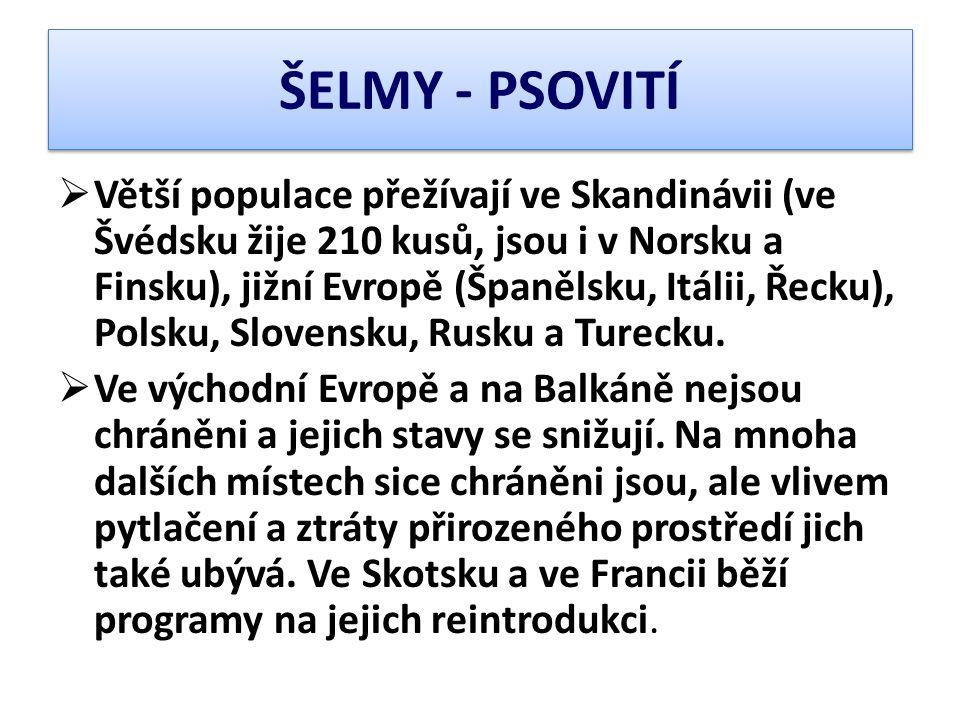 ŠELMY - PSOVITÍ  Větší populace přežívají ve Skandinávii (ve Švédsku žije 210 kusů, jsou i v Norsku a Finsku), jižní Evropě (Španělsku, Itálii, Řecku