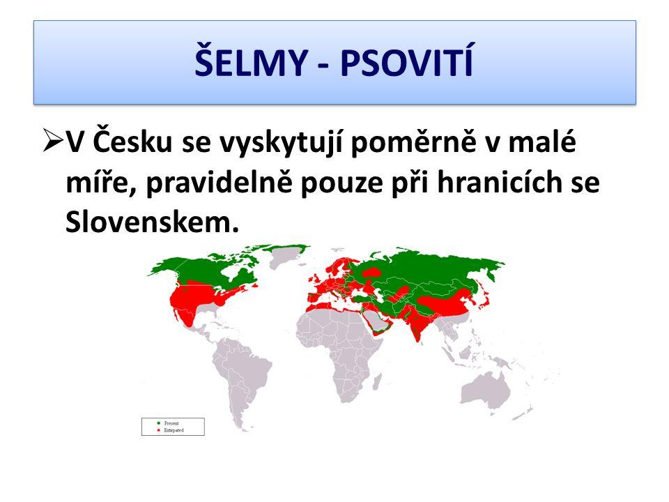 ŠELMY - PSOVITÍ  V Česku se vyskytují poměrně v malé míře, pravidelně pouze při hranicích se Slovenskem.