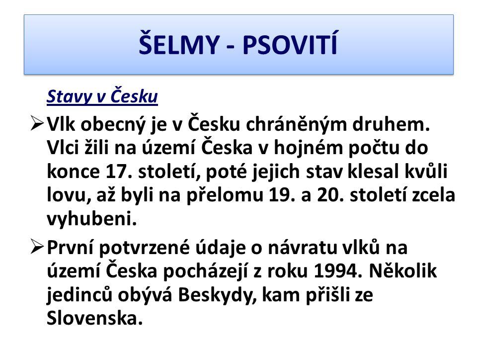 ŠELMY - PSOVITÍ Stavy v Česku  Vlk obecný je v Česku chráněným druhem. Vlci žili na území Česka v hojném počtu do konce 17. století, poté jejich stav
