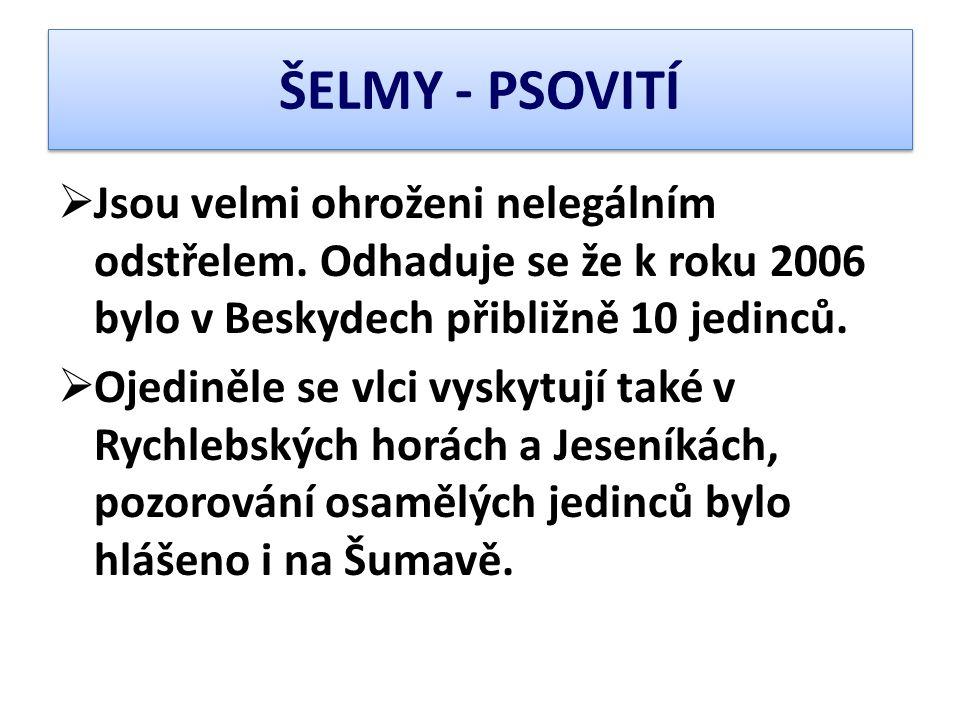 ŠELMY - PSOVITÍ  Jsou velmi ohroženi nelegálním odstřelem. Odhaduje se že k roku 2006 bylo v Beskydech přibližně 10 jedinců.  Ojediněle se vlci vysk