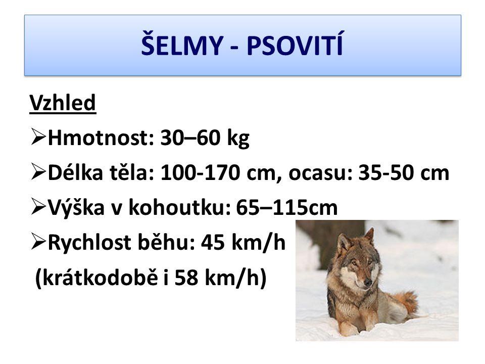 ŠELMY - PSOVITÍ Vzhled  Hmotnost: 30–60 kg  Délka těla: 100-170 cm, ocasu: 35-50 cm  Výška v kohoutku: 65–115cm  Rychlost běhu: 45 km/h (krátkodob