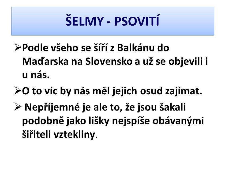  Podle všeho se šíří z Balkánu do Maďarska na Slovensko a už se objevili i u nás.  O to víc by nás měl jejich osud zajímat.  Nepříjemné je ale to,