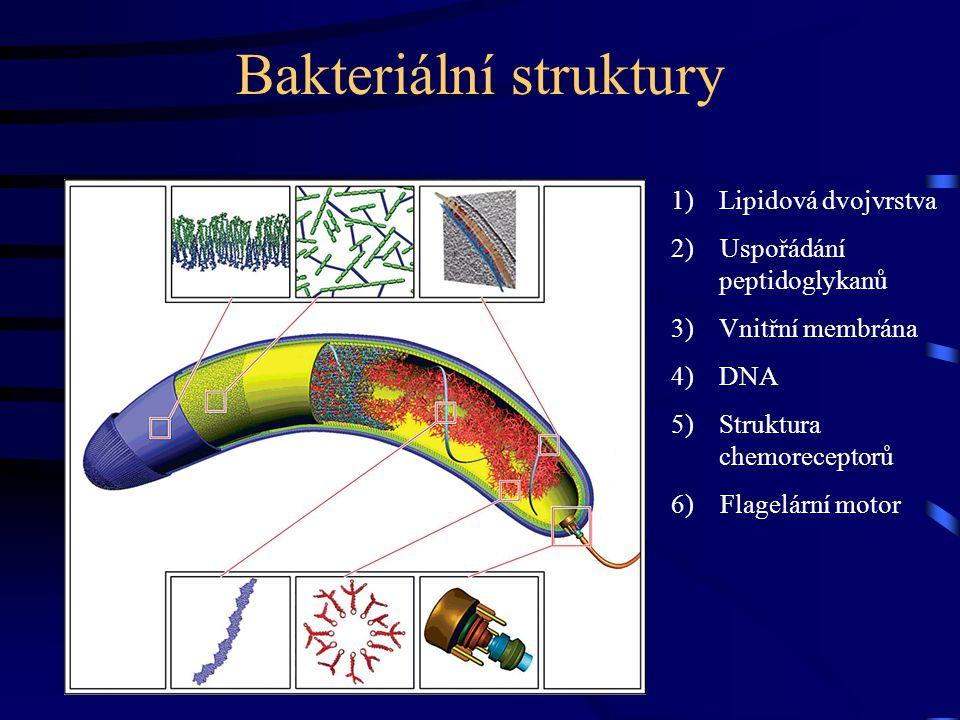 Bakteriální struktury 1)Lipidová dvojvrstva 2) Uspořádání peptidoglykanů 3)Vnitřní membrána 4)DNA 5)Struktura chemoreceptorů 6) Flagelární motor
