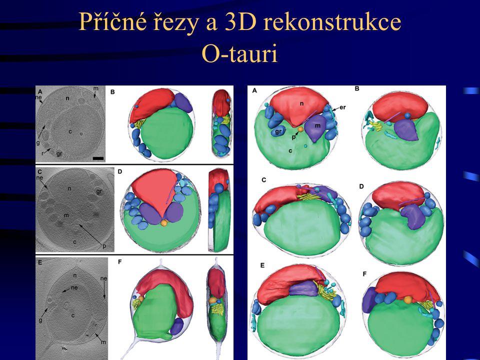 Příčné řezy a 3D rekonstrukce O-tauri