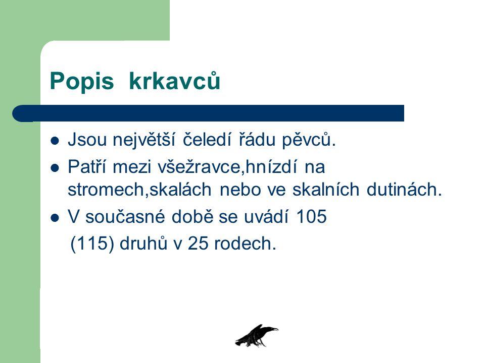 Popis krkavců Jsou největší čeledí řádu pěvců. Patří mezi všežravce,hnízdí na stromech,skalách nebo ve skalních dutinách. V současné době se uvádí 105