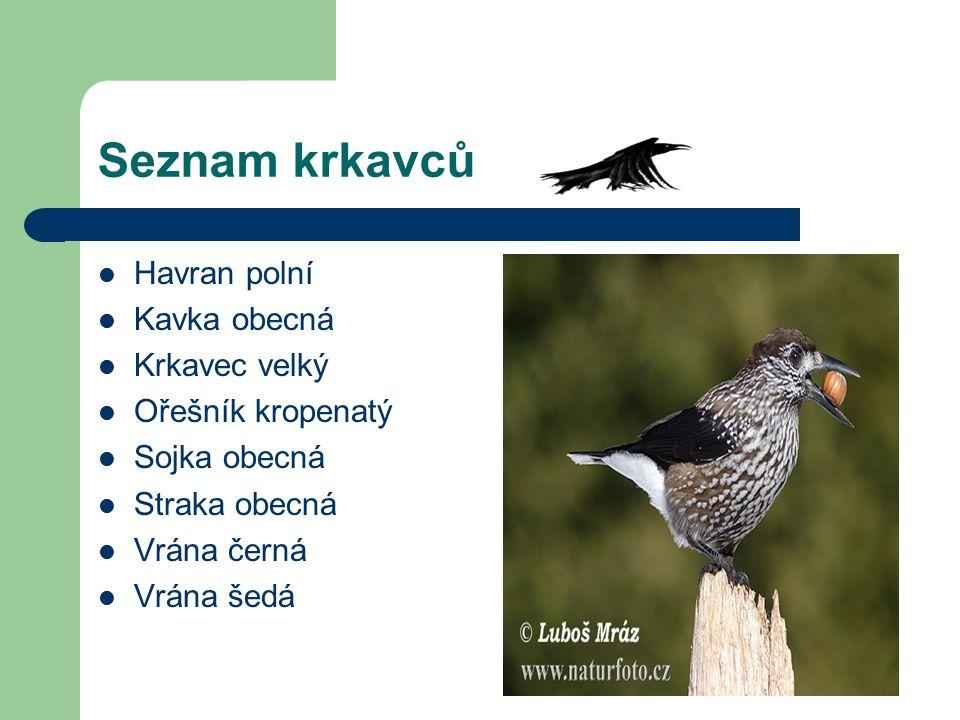 Seznam krkavců Havran polní Kavka obecná Krkavec velký Ořešník kropenatý Sojka obecná Straka obecná Vrána černá Vrána šedá