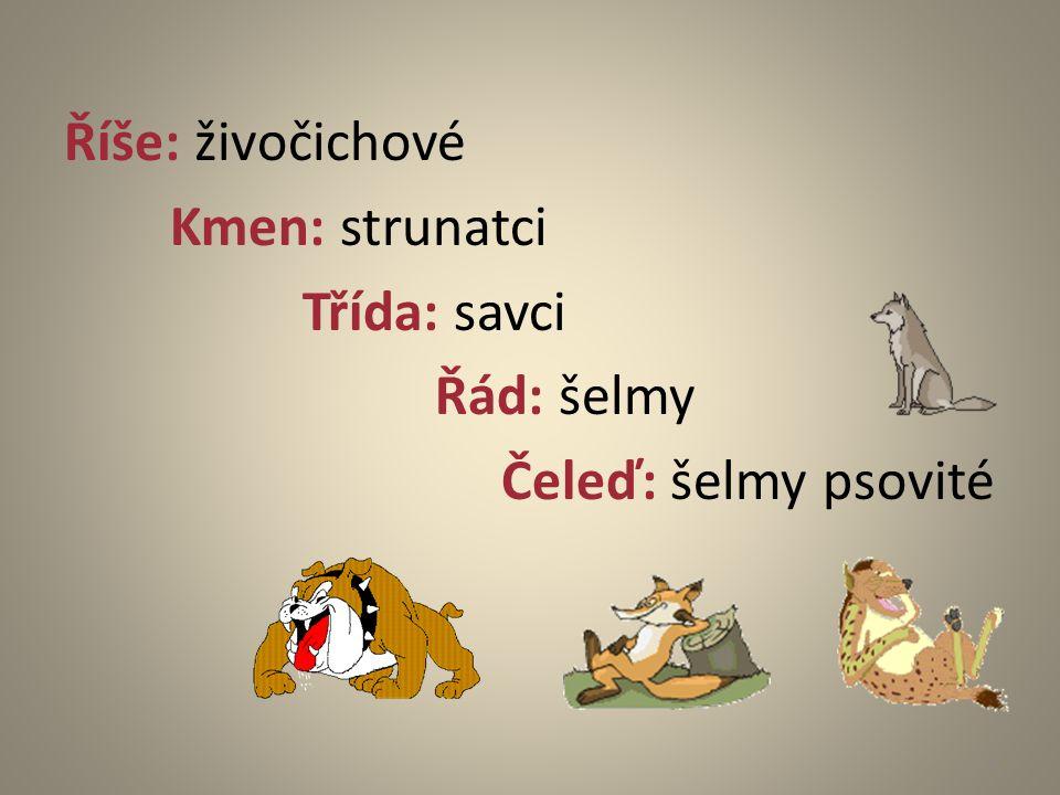 Říše: živočichové Kmen: strunatci Třída: savci Řád: šelmy Čeleď: šelmy psovité 2