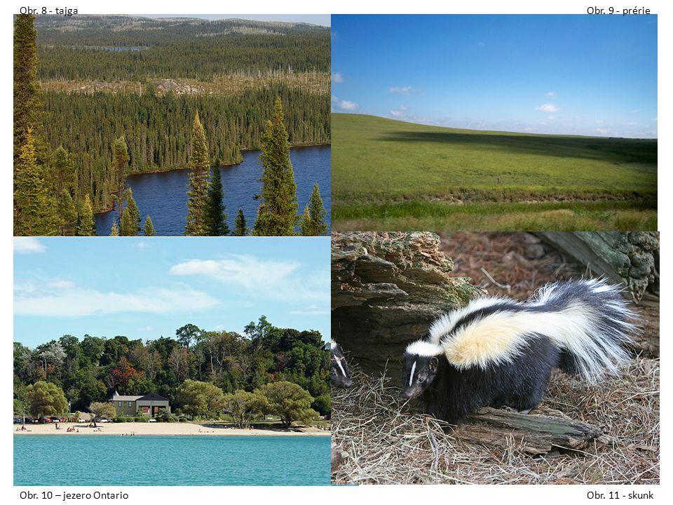Obr. 8 - tajgaObr. 9 - prérie Obr. 10 – jezero OntarioObr. 11 - skunk