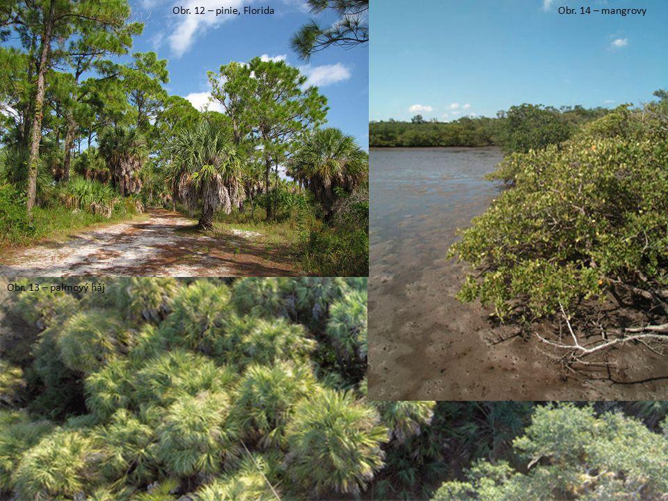 Obr. 12 – pinie, Florida Obr. 13 – palmový háj Obr. 14 – mangrovy