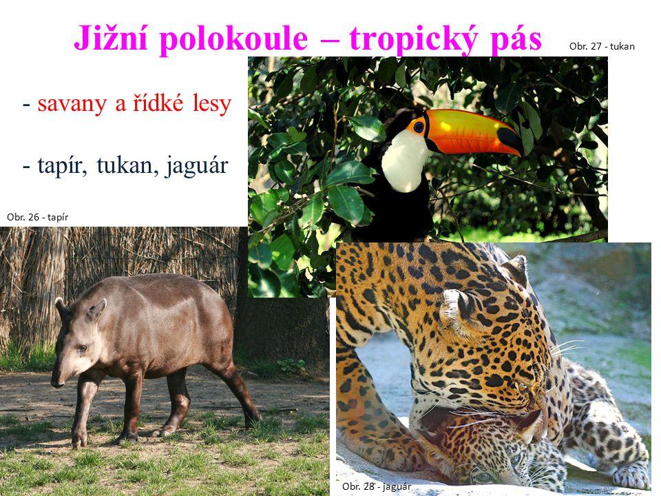 Jižní polokoule – tropický pás - savany a řídké lesy - tapír, tukan, jaguár Obr. 26 - tapír Obr. 28 - jaguár Obr. 27 - tukan