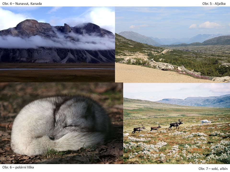 Obr. 4 – Nunavut, KanadaObr. 5 - Aljaška Obr. 6 – polární liška Obr. 7 – sobi, albín