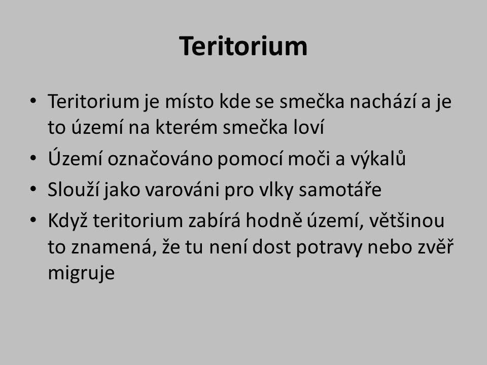 Teritorium Teritorium je místo kde se smečka nachází a je to území na kterém smečka loví Území označováno pomocí moči a výkalů Slouží jako varováni pro vlky samotáře Když teritorium zabírá hodně území, většinou to znamená, že tu není dost potravy nebo zvěř migruje