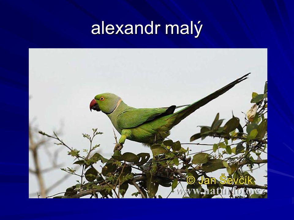 Řád: Kukačky (Cuculiformes) stromoví i pozemní ptáci noha s vratiprstem – 2 prsty dopředu, 2 dozadu hnízdní parazitismus