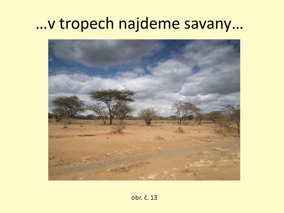 …v tropech najdeme savany… obr. č. 13