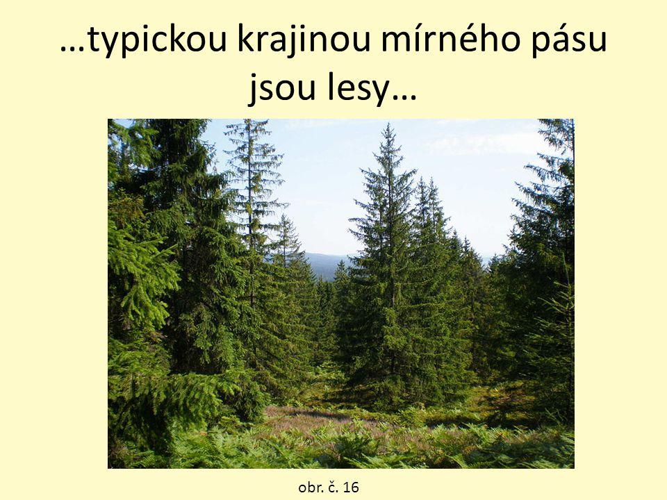 …typickou krajinou mírného pásu jsou lesy… obr. č. 16