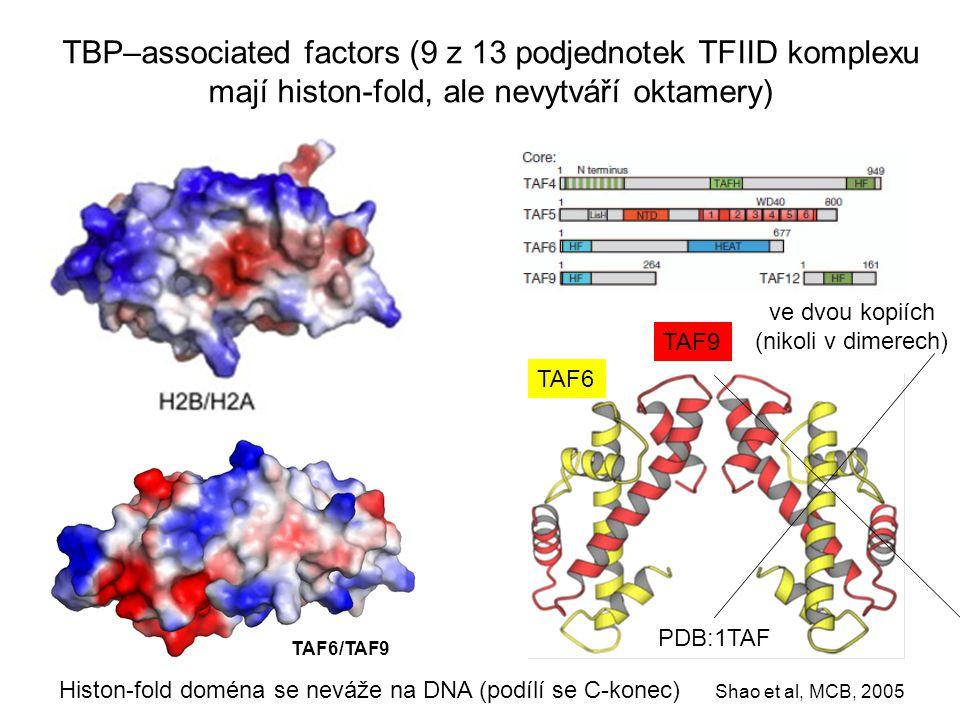 TAF6 TBP–associated factors (9 z 13 podjednotek TFIID komplexu mají histon-fold, ale nevytváří oktamery) Histon-fold doména se neváže na DNA (podílí s