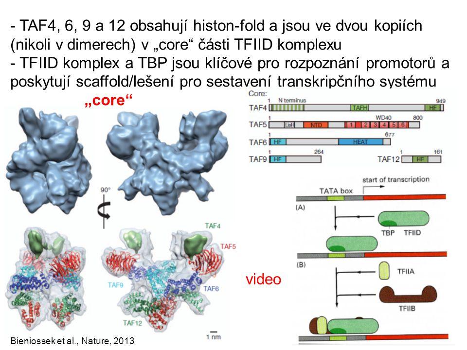 """Bieniossek et al., Nature, 2013 video - TAF4, 6, 9 a 12 obsahují histon-fold a jsou ve dvou kopiích (nikoli v dimerech) v """"core"""" části TFIID komplexu"""
