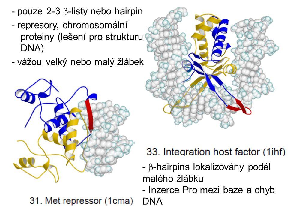 - pouze 2-3  -listy nebo hairpin - represory, chromosomální proteiny (lešení pro strukturu DNA) - vážou velký nebo malý žlábek -  -hairpins lokalizo