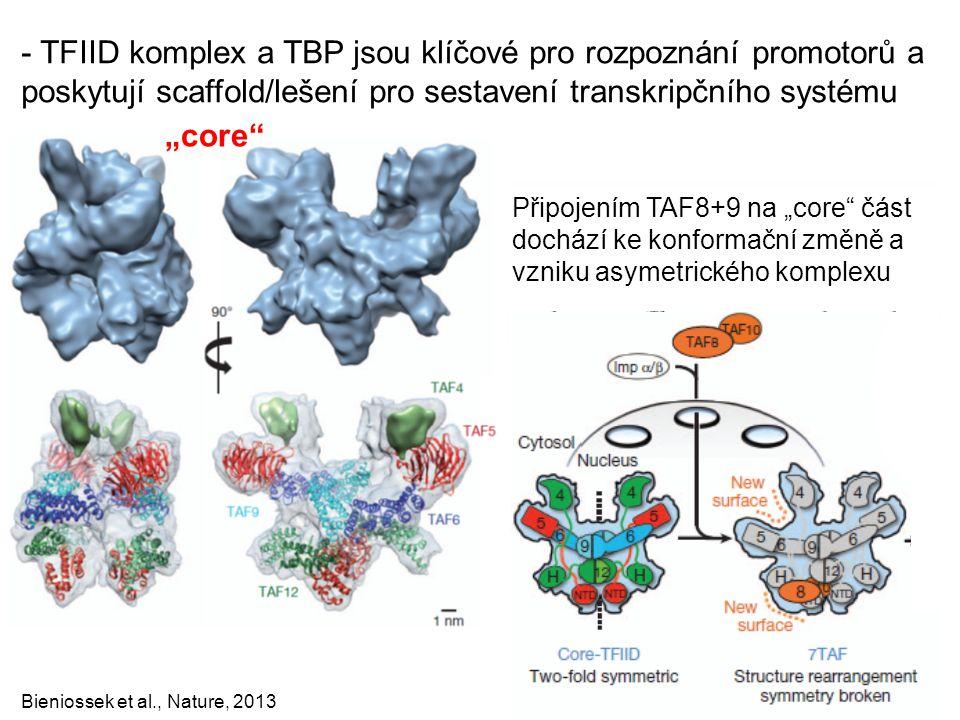 Bieniossek et al., Nature, 2013 - TFIID komplex a TBP jsou klíčové pro rozpoznání promotorů a poskytují scaffold/lešení pro sestavení transkripčního s