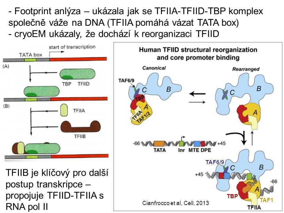 Cianfrocco et al, Cell, 2013 TBP TFIIA TAF1 TFIIB je klíčový pro další postup transkripce – propojuje TFIID-TFIIA s RNA pol II TAF6/9 - Footprint anlý