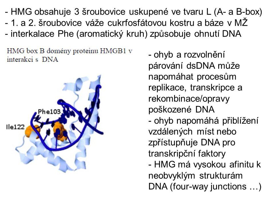 - Histony a HMG vážou DNA sekvenčně nespecificky - histonové podjednotky (H2A, H2B, H3, H4) obsahují svazky 3-4 šroubovic skládaných proti sobě (histon fold) - DNA se obtáčí kolem válcovitého oktameru (2x4 histony) - šroubovice se vážou na cukrfosfátovou kostru DNA 1KX3 Liljas a spol.