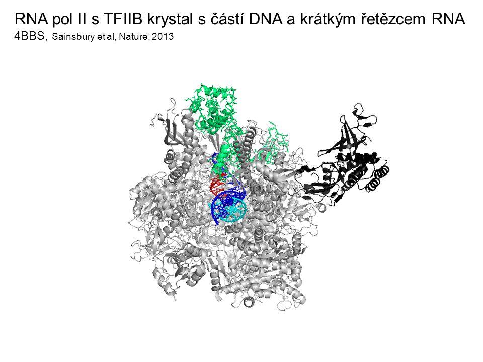 RNA pol II s TFIIB krystal s částí DNA a krátkým řetězcem RNA 4BBS, Sainsbury et al, Nature, 2013