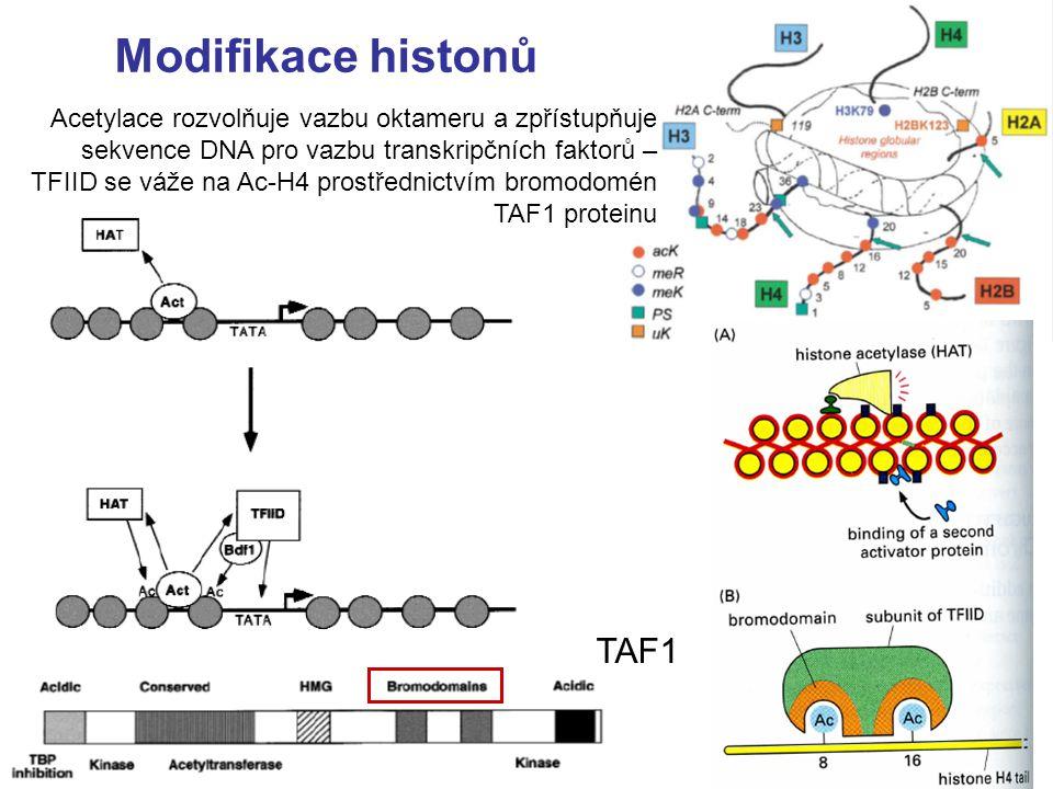 - Transkripční faktory NF-Y (podjednotky B a C ) obsahují histon-fold a vážou se sekvenčně nespecificky na cukrfosfátovou kostru jako histony - DNA se v důsledku vazby ohýbá podobně jako v nukleosomech - NF-YA podjednotka rozeznává CCAAT sekvenci pomocí  - šroubovice (interkalace do MŽ) Nardini et al., Cell, 2013